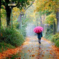 گاهی از میان باران و برگ ها (هیوا مسیح )